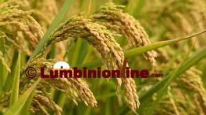 साउनदेखि 'कृषि विकास रणनीति'