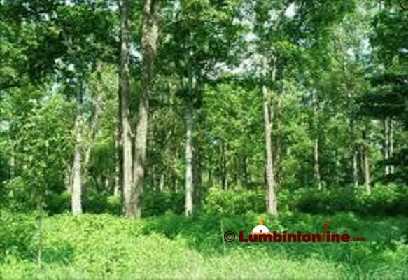 वन मापन