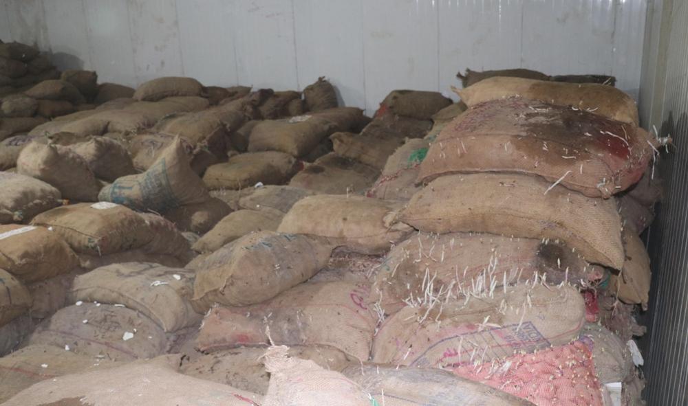 रामपुरको शितभण्डारमा राखेको आलु बिग्रियो : किसानद्वारा क्षेतीपूर्ति माग